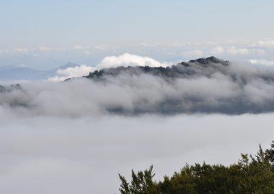 Organbidexka con niebla