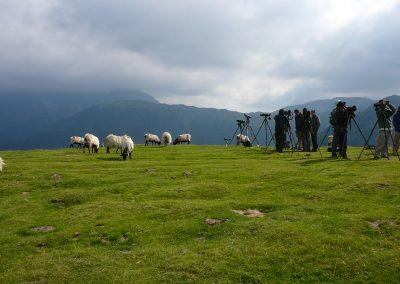 Observadores con ovejas
