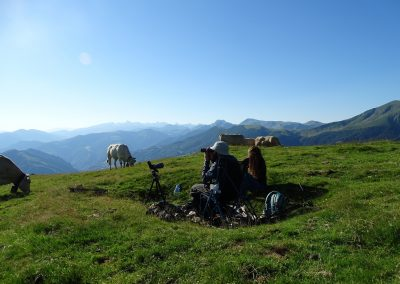 Observadores rodeados de vacas