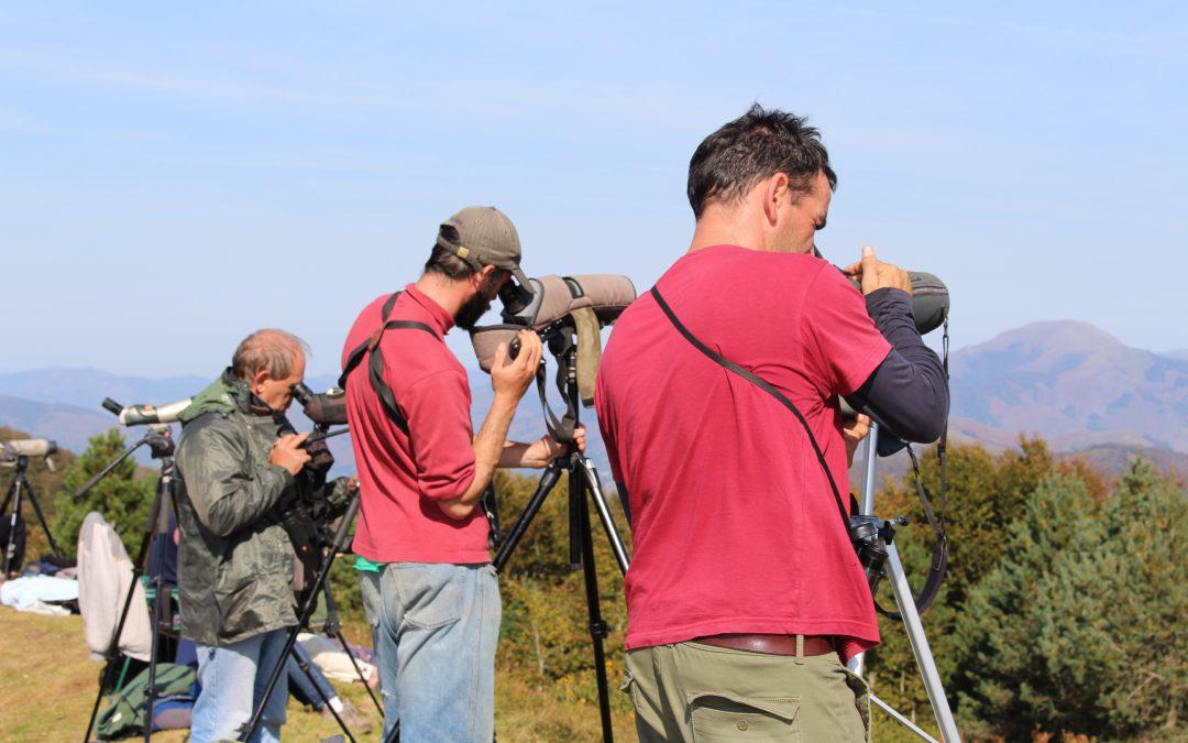 Las golondrinas comunes sobrevuelan los Pirineos navarros, franceses y aragoneses