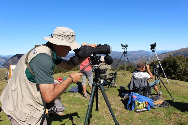 20.000tik gora miru beltz ikusi dira uztailean, mendebaldeko Pirinioetan