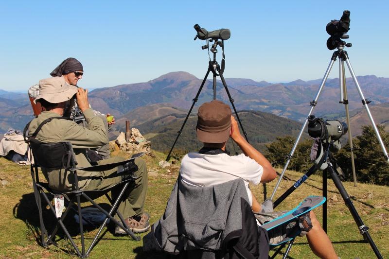 Continúa el paso de aves migratorias por los Pirineos occidentales