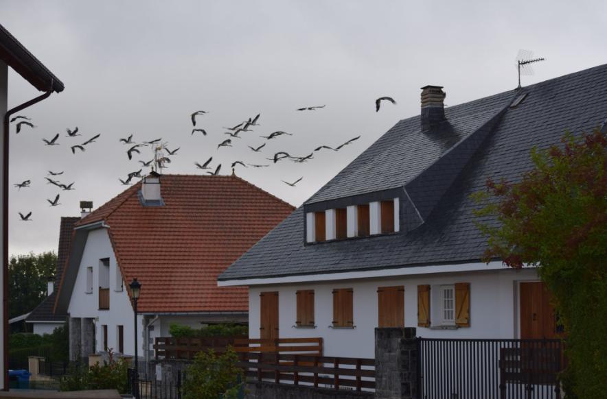 Cigüeñas sobrevolando Auritz/Burguete